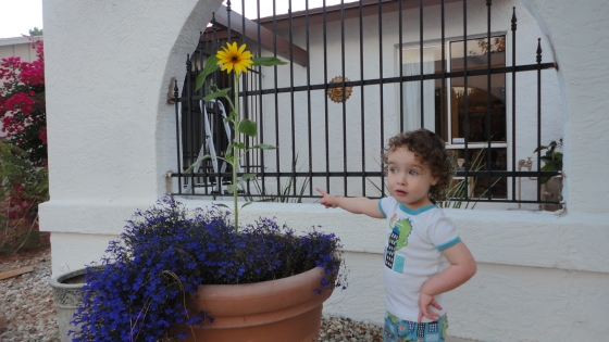Gwen and her sunflower